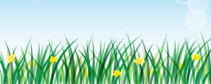 Green grass background with daffodils