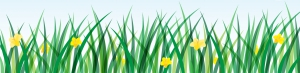 Green banner with grass and daffodil